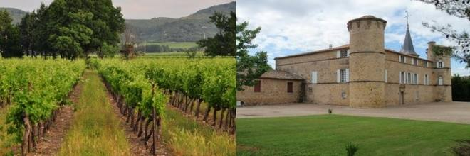 winery-south-of-france-2