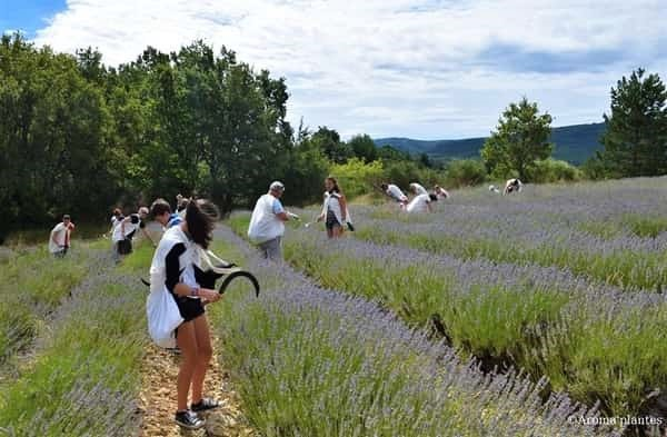 lavender tour southern france tour