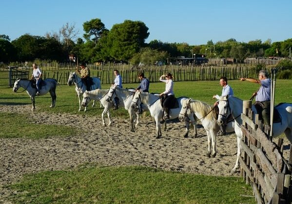 things to do in southern france: Camargue