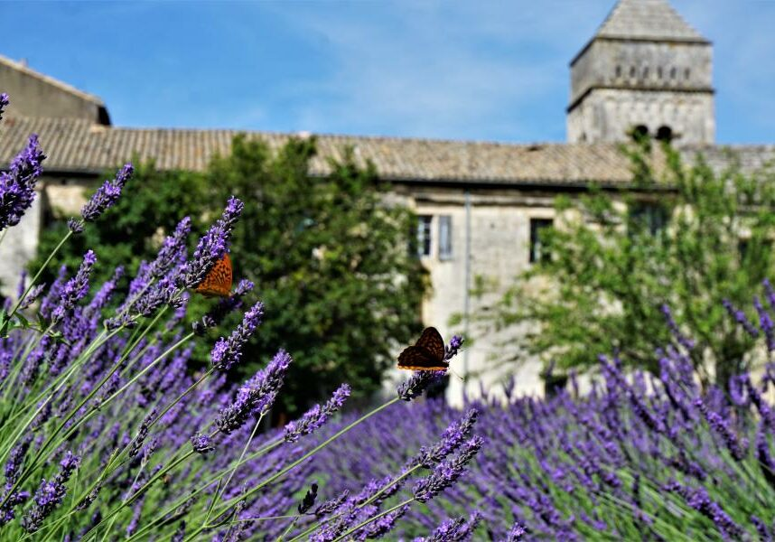 Southern France Small Group Tour (18)